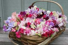 I want a basket of flowers like this on my front porch! (ps, this blog entry is really great food for thought)