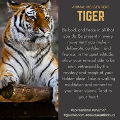 Be bold and fierce in all that you do! What animal speaks to you the most? What animal would you like to see showcased here in Animal Messengers? Tiger Spirit Animal, Spirit Animal Totem, Animal Spirit Guides, Animal Totems, Animal Meanings, Animal Symbolism, Tiger Zodiac, Tiger Quotes, Tiger Species