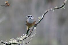 ¿Te vienes a descubrir nuevas especies de aves en el corazón de Sierra Morena?