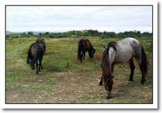 Change Islands Newfoundland Pony Refuge