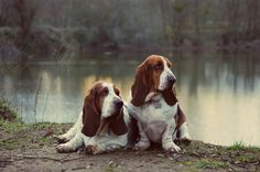 My Hounds of Love