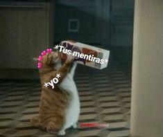 Puxa oh😔👊 - - - - - - - - - - - - - - - - - - - - - - - - - - - - - - - -- - - - - - - - - - - -- - - - - - - - Funny Relatable Quotes, Funny Memes, Romantic Humor, Tumblr Love, Cute Love Memes, Frases Tumblr, Pinterest Memes, Spanish Memes, Me Too Meme
