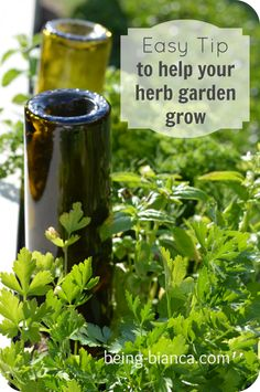 Get a green thumb with this easy gardening tip to keep a small herb garden lush and growing all season.