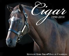Photo courtesy Kentucky Horse Park, James Shambhu It was in the 1995 Breeders' Cup Classic that Cigar became America's sweetheart. He turned doubters into believers as one of the greatest horses to ever race.Throughout his racing career, Cigar has generated nearly 10 million dollars and won races all over the world over, from Dubai to Canada to the United States