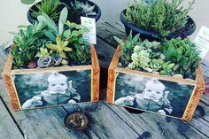 Mimo verde super personalizado para os padrinhos  @camilaiensen e @matheusdportella obrigada por confiar no meu trabalho  #suculentasycactus #suculentaslove #suculentasbr #suculentas #arranjo #arranjodesuculentas #mimoverde #presente #terrarios #cactos #natureza #terrarium #lovesucculents #jardim #lovenyjob #decor #decoracao #plantas #homedecor #loveplants #suculentasbrasil #minijardim #garden #jardinagem #instaphoto #indoorplants - Architecture and Home Decor - Bedroom - Bathroom - Kitchen…