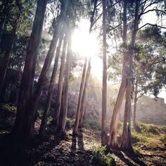 now i see the secret of making the best person: it is to grow in the open air and to eat & sleep with the earth. -walt whitman (glen canyon park, san francisco, ca. photo: michele janezic)