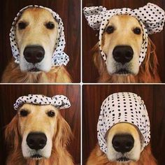 El perro y el pañuelo
