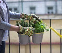 Veľký bylinkový sprievodca alebo čo pestovať na balkóne