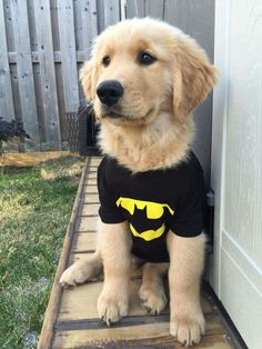 Hairy Batman <3