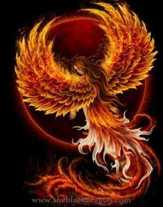Ideas For Phoenix Bird Firebird Dragon Dark Phoenix, Phoenix Bird, Phoenix Rising, Phoenix Wings, Phoenix Artwork, Phoenix Images, Fantasy Creatures, Mythical Creatures, Fantasy Kunst