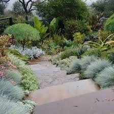 Festuca Elijah Blue in Landscape Beyond Blue, Sidewalk, Landscape, Plants, Google Search, Landscaping, Landscape Paintings, Flora, Plant