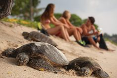 Some teens sitting right next to some turtles after a snorkling adventure