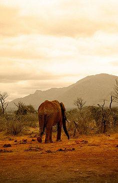 Elefante, Parque Nacional de Tsavo East