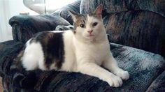 Found Cat - Unknown - Hamilton, ON, Canada L8S 3L2 on November 19, 2015 (21:00 PM)