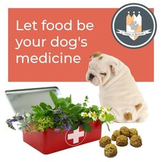 Gut Health is the key to a long, happy & active life for your dog. Repair & support the gut, & build a healthy immune system the natural way, with House of Barkleigh nutritious treats & remedies. Dog Vitamins, Healthy Dog Treats, Service Dogs, Gut Health, Little Dogs, Immune System, Pet Birds, Reptiles, Animal Kingdom
