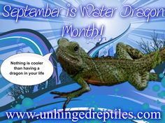 September Water Dragon