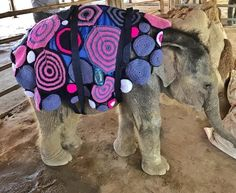 Baby Elephants Fend Off Myanmar Cold Spell With Homemade Blankets | HuffPost