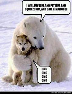 polar bear hugging husky i will love him - Google Search
