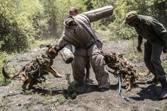 Ranger trainees and trainee dogs simulate an ambush against rhino poachers at the Paramount Group Anti-Poaching training and K9 (canine) academy in Magaliesberg, South Africa