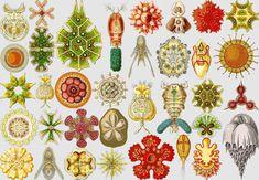 Ernst Haeckel - Google Search