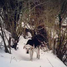 My dog! His nane is flip, and he love snowy days!