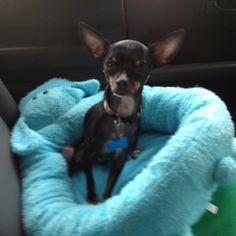 Steinmart: Best Dog Bed Ever   Items At Steinmart ...