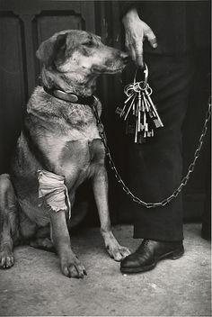 André Kertész,Mr. Caillot's Dog and the Keys of Notre Dame, Paris, 1928