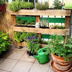 """Die ersten Monate mit dem Palettengarten sind rum - erstes Zwischenfazit: praktisch Kräuter wachsen """"wie hulle"""" Salat geht nicht so gut mehr Erde verwenden einige Kräuter sind """"raumgreifender"""" als gedacht ... #duesseldorf #bilk #urban"""