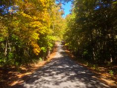 A walk into Autumn at the Randolph County State Recreation Area. Photo courtesy of Christopher Martin. Randolph County, Illinois, Country Roads, Tours, Autumn, Photography, Travel, Fotografie, Photograph