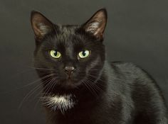 Are you bringing a regal black cat into your family? Then you may be wondering what to name him or her that exemplifies theirbeauty and shining personality. Here are 15 unique names that celebrate those stunning, shiny black coats. Would …