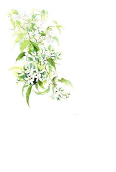 Visit the post for more. Pictures To Draw, Art Pictures, Flower Frame, Flower Art, Background Drawing, Plant Vector, Watercolor Tips, Plant Drawing, Plant Art