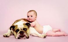 Bull Dog--  raças de cachorros para crianças