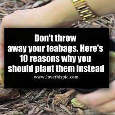 There& actually quite a few things you can do with used tea bags, especially in the garden. Keep reading to learn why you might want to bury those teabags instead of tossing them in the trash. Allotment Gardening, Garden Compost, Planting, Gardening Tips, Fruit Garden, Garden Plants, House Plants, Back Gardens, Outdoor Gardens