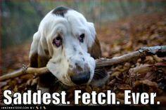 ahahaha #basset hound