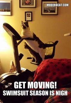 It's #MemeMonday! We feel you, kitty! http://moderncat.com/articles/more-modern-cat-memes/69456