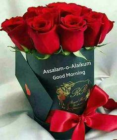 Amazing Flowers, Beautiful Roses, Terre Plate, Montreal Botanical Garden, Good Morning Roses, Rose Flower Wallpaper, Good Morning Beautiful Images, Rosa Rose, Rose Images