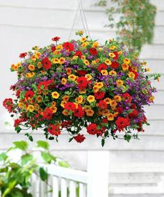 Million Bells in hanging basket Learn about the Best Plants For Hanging Baskets. Hanging baskets filled with colorful flowers and plants are very showy and elegant and adorn any garden. You don't need a lot of space to display them, too! Container Flowers, Container Plants, Container Gardening, Plants For Hanging Baskets, Hanging Flowers, Colorful Flowers, Beautiful Flowers, Pot Jardin, Pot Plante