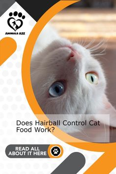 Find out if cat food actually has an effect on the number of hairballs. Get more information at AnimalsA2Z.com. Best Cat Food, Dry Cat Food, Cat Throwing Up, Different Breeds Of Cats, Cat Profile, Cat Food Brands, What Cat, Owning A Cat, Pet Care Tips