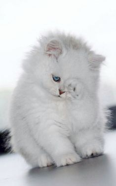 Cute Cats And Dogs Videos Cute Kittens Hissing Cute Baby Cats, Kittens And Puppies, Cute Cats And Dogs, Cute Little Animals, Cute Cats And Kittens, Cute Funny Animals, Kittens Cutest, Animals And Pets, I Love Cats