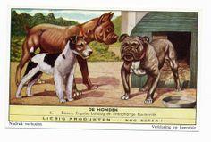 Vintage bulldog trading card