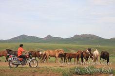 Motorcycle Herder