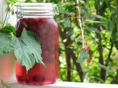 Mason Jars, Homemade, Vegetables, Drinks, Diy, Food, Drinking, Beverages, Home Made