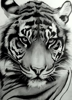 Draw Tigers My tattoo ~ Sumatran Tiger by ~artistelllie - Art Tigre, Animal Drawings, Art Drawings, Drawing Art, Drawing Ideas, Drawing Animals, Drawings Of Tigers, Art Sketches, Drawing Poses