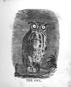 The illustrated alphabet of birds - Page 35, the Owl