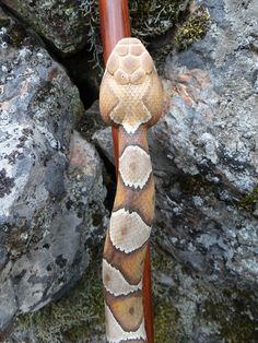 I hand-carved this Copperhead Snake walking stick out of a single piece of Lodgepole Pine and hand painted it. This one has it's head lifted off the stick;