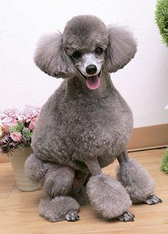 スリム・コンチ --愛犬の友 ヘアスタイルカタログ--