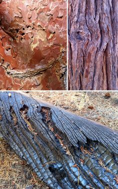Tree Bark photos by Claudia Brown
