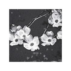 Black and White Dogwood Blossoms Canvas Gallery Wrap Canvas