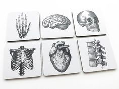 COASTERS hostess gifts human Anatomy body medical student goth skull anatomical heart party favors stocking stuffers housewarming geek brain by artaltered on Etsy