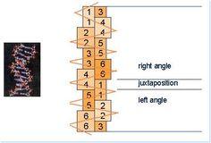 Profiles Conclusion | HumanDesign.com - Human Design System